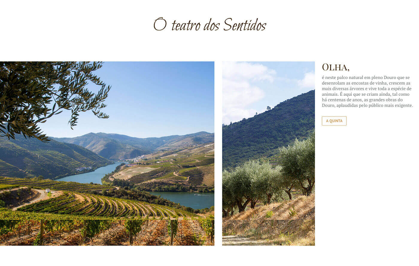 vinho, website, quinta de ventozelo, web design